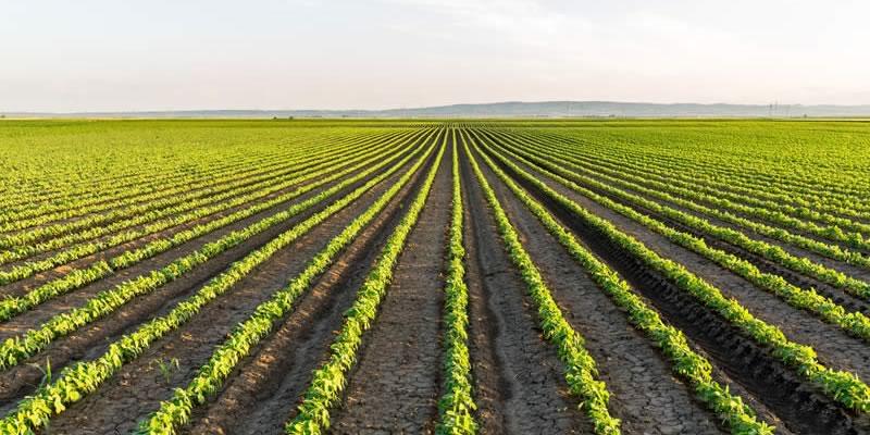 PRODUCTIVE ROW CROP FARMING