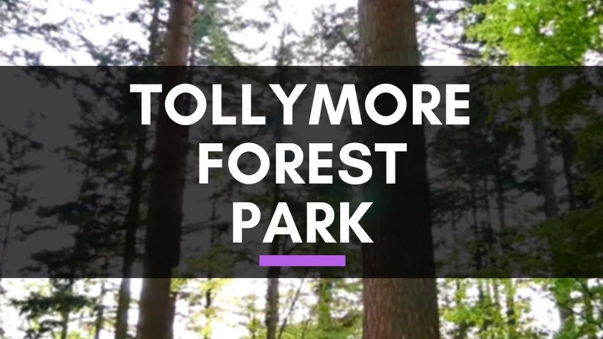 Forest Wedding Northern Ireland: Welcome to Tollymore Forest Park