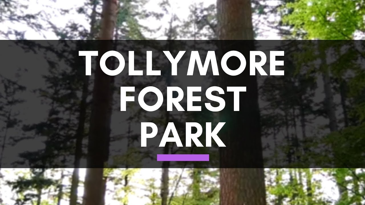 Forest Wedding Northern Ireland Tollymore Forest Park Love Travel Bug