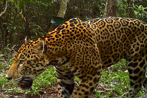 15 Wildlife Spottings in Guatemala