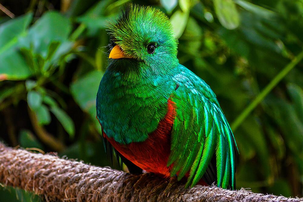 Facts About El Quetzal