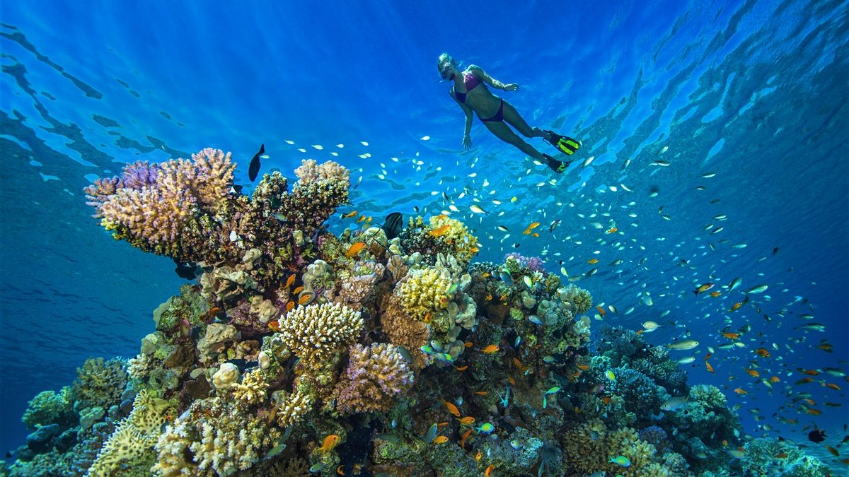 Diving in Central America – A Guide to 8 of the Best Dive Sites in Central America