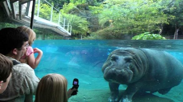 Most Fascinating Zoos in the World
