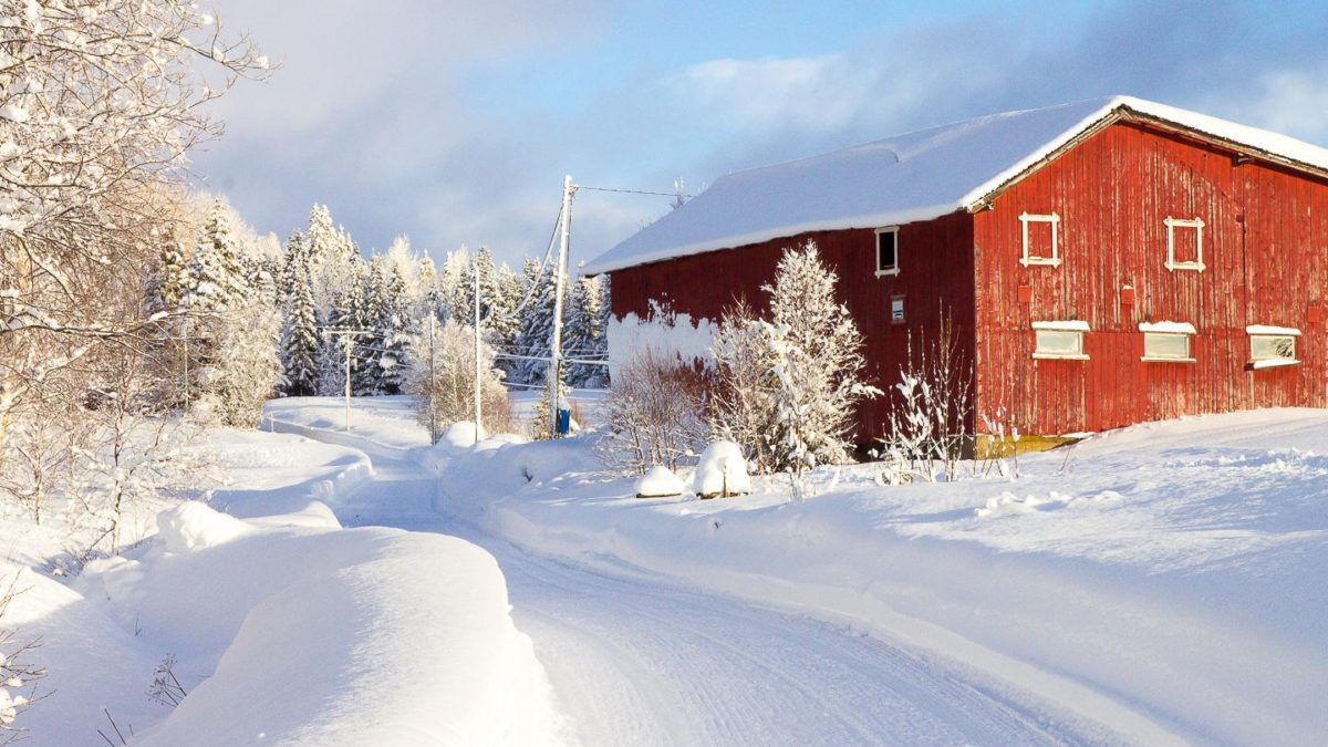 Things You Should Do In Oslo In Winters
