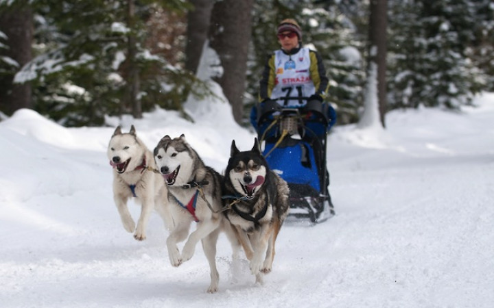 Things To Do In Tromso In Winter