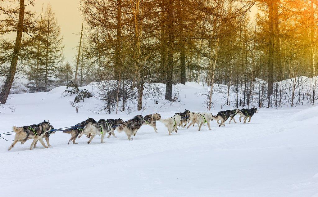 dog sledding in Rovaniemi